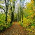 Bild Waldweg