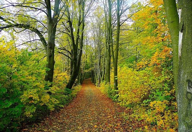 Natur erleben ohne Abgase