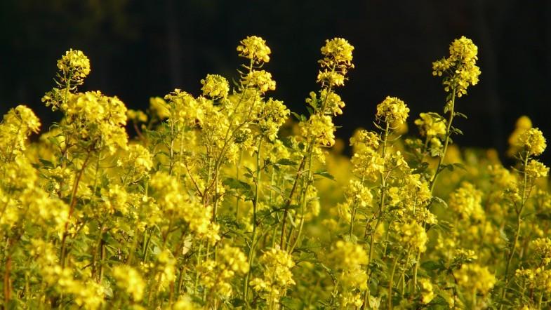 Was ist Biowasserstoff?