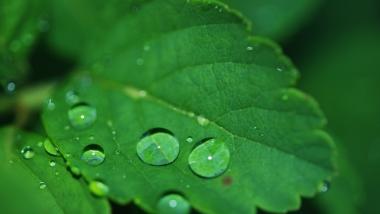 Was ist der Kohlenstoffkreislauf?