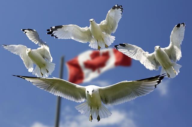 Senvion kündigt Fortschritt beim Riesen-Windprojekt in Kanada an