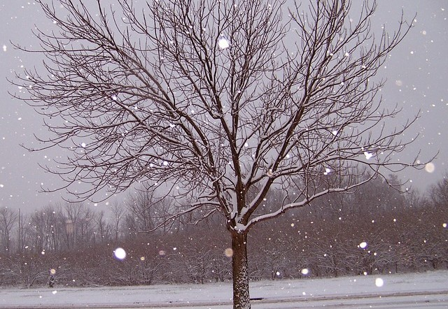 Dezember 2014 war der Windkraft-Rekordmonat dank dem stürmischen Wetter