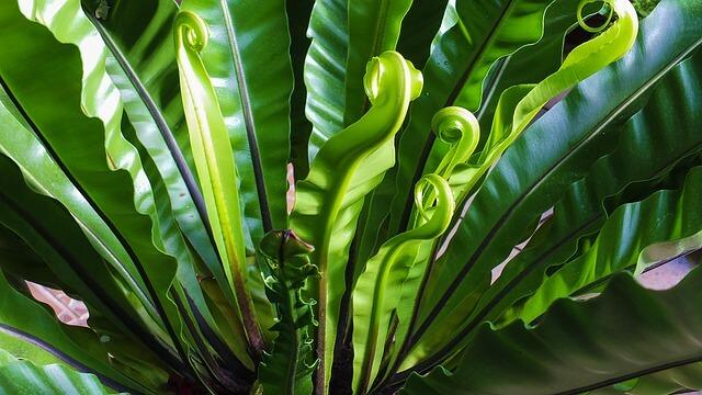 """Pflanzen liefern grüne Energie: """"Plant Power"""""""