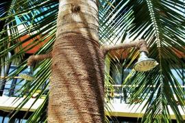Solardusche reinigen: So haben Legionellen keine Chance