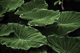 Wachstum bei Pflanzen – so schöpfen sie ihre Energie