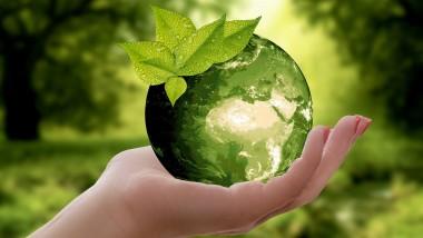 Die Nachhaltigkeit als Unternehmer sichtbar machen